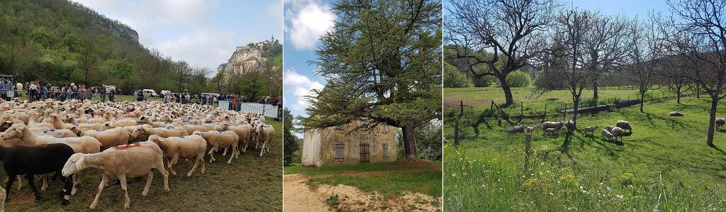 roccamadour-mouton.jpg